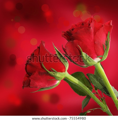 Red roses bouquet, isolated on red background