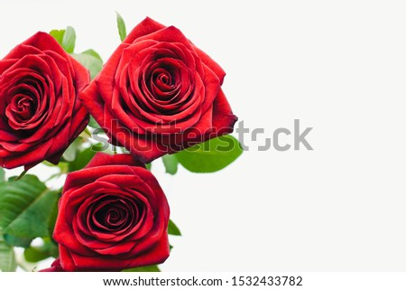 Red roses, bouquet of roses, red roses on a white background, rose petals