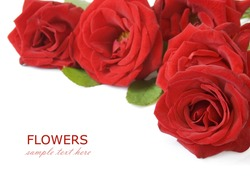 Red roses bunch isolated on white background with sample text