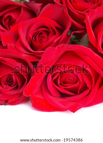 Red roses bunch isolated on white. See more rose images in my portfolio.