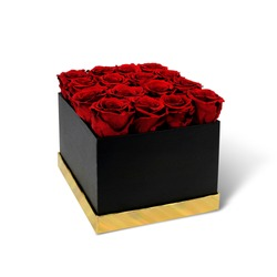 Red roses in a black gift box isolated on white background. Burgundy roses for mother's day. Flowers on March 8. Happy women's day. Bouquet for a birthday