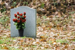 Red Roses in front of Gravestone
