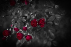 red roses in gothic style