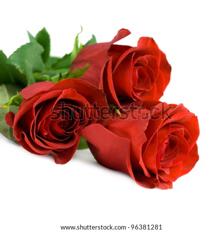 Red roses. Isolated on white background.