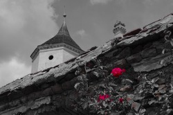 Red roses on an old stone castle wall