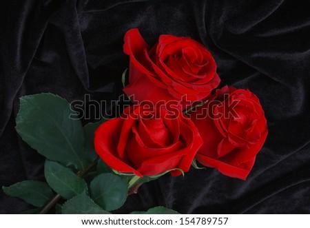 red roses on black satin