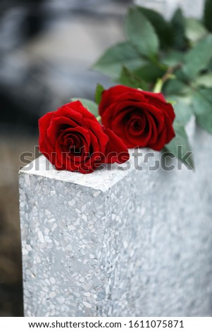 Red roses on light grey tombstone outdoors. Funeral ceremony Сток-фото ©