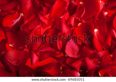 Red roses petals Valentine's Day