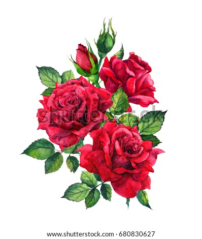 Stock Photo Red roses. Watercolor sketch