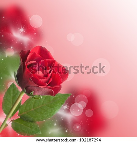 red roses with bokeh and copy space