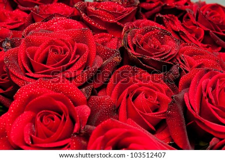 red roses with water drop