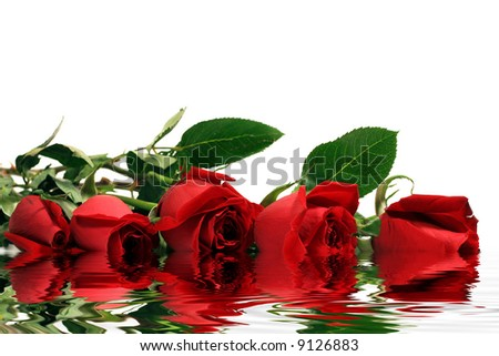 Red roses with water reflection effect