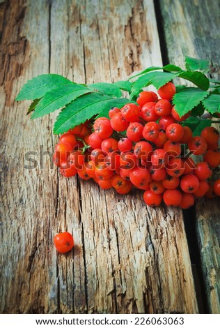 red rowan branches on the old wooden background. autumn theme