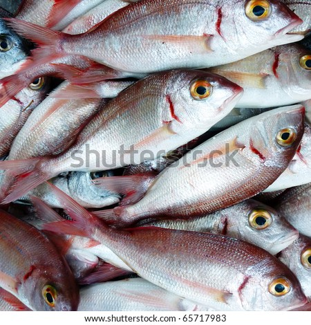 Red sea bream fresh fish closeup