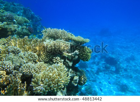 stock-photo-red-sea-coral-reef-48813442.jpg