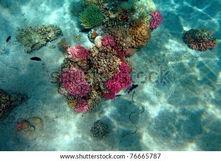 Red Sea coral reef with fishes and spotted eel