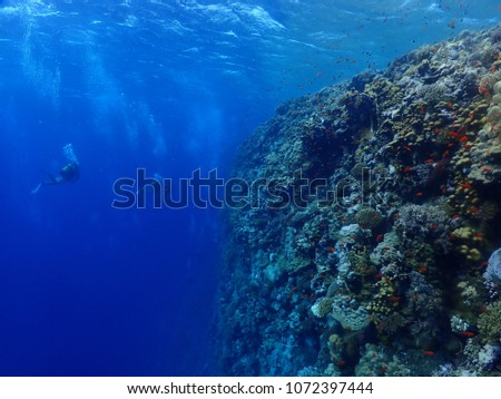 red sea scuba diving picture #1072397444