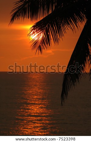 red sea sunset through palm leaf