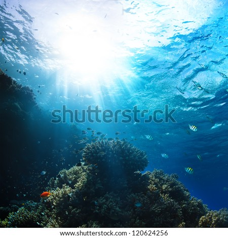 red sea underwater coral reef with fishes and sunrays at the surface