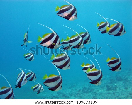 red sea with exotic fishes