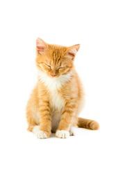 red sleepy kitten