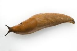 Red; slug