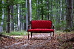 red sofa in the forest