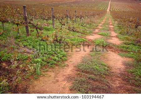 Red soil farm road running into distance through a bare vineyard, red brown and green tones.