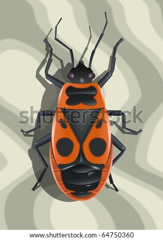 Red soldier bug on surface with abstract texture. Raster version of vector illustration (id: 54344500)