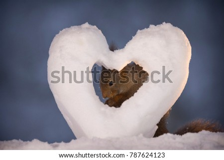 red squirrel is standing behind a snow heart  #787624123