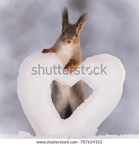 red squirrel is standing with a snow heart   #787624102