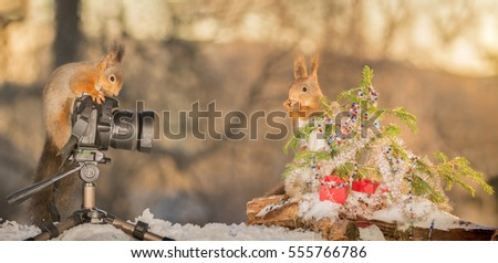 red squirrel standing on snow with a photo camera