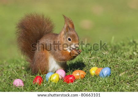 Red squirrel with easter eggs