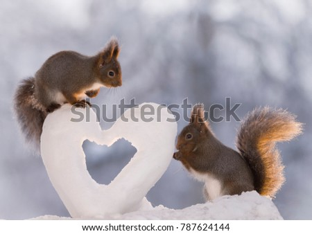 red squirrels standing with a snow heart #787624144
