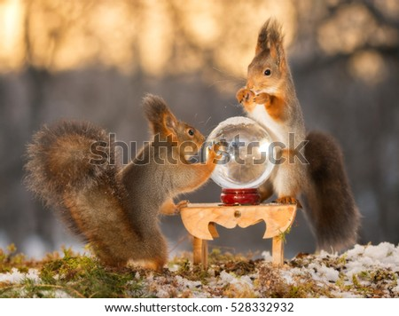 red squirrels standing with  crystal ball  and with back light  #528332932