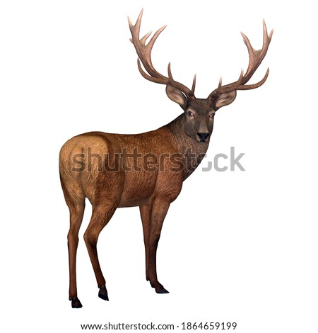 Red Stag Deer 3d illustration - The Red deer is native to Europe, Asia, Iran and Africa is one of the largest species of ungulates.