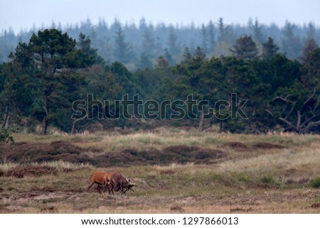 Red stags fighting #1297866013