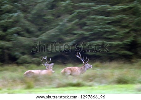 Red stags fighting #1297866196