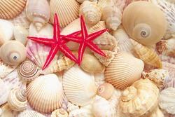 Red starfish and sea shells