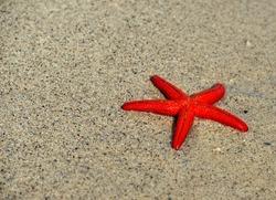 Red starfish (Echinaster sepositus) on the beach