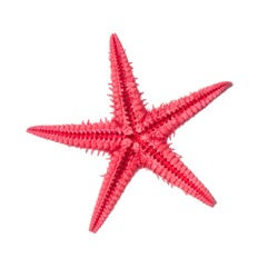 Red starfish isolated on a white background