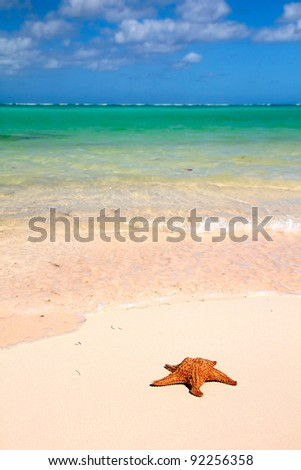 Red starfish on a  beautiful tropical beach - stock photo