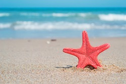 red starfish on the sand