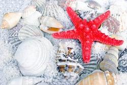 Red starfish, sea slugs and sea shells
