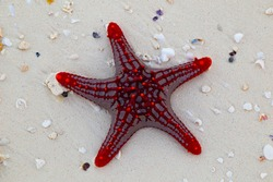 Red starfish, sea stars,  close-up on a background of sea sand.
