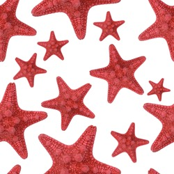 Red starfish seamless pattern. Isolate on a white background. Endless texture for sea design, greeting cards, fabrics, announcements, posters.