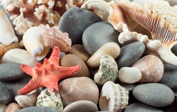 Red starfish with shells on the sea rocks