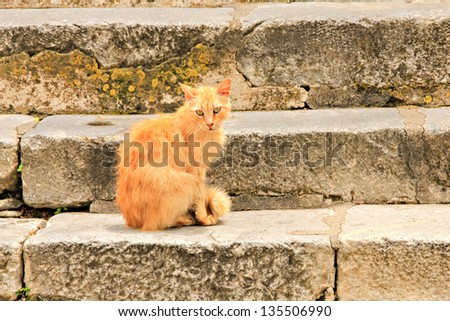 Red stray cat on steps in old town Rhodes, Greece