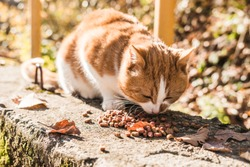 Red street homeless cat eats dry food on asphalt in the fall. Help stray animals, feeding.