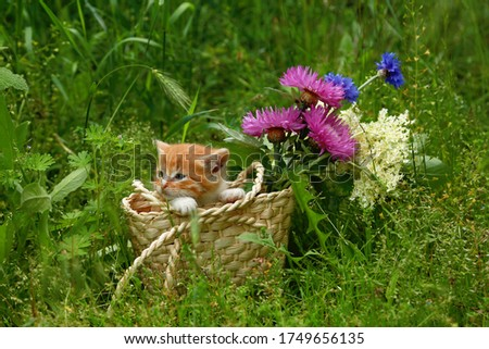 Red striped little kitten in a wicker basket on green grass with pink and blue flowers. Gift for a child, for a beloved woman. Place for inscriptions